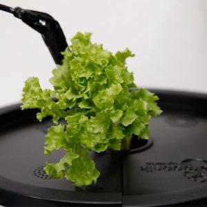 Salat // 01 // SN