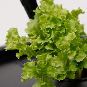 Salat // 02 // SN