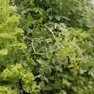 Salat // 04 // SN