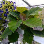 Blumen // 02 // aeroponisches System