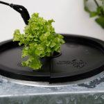 Salat // 04 // aeroponisches System