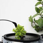 Salat // 11 // aeroponisches System